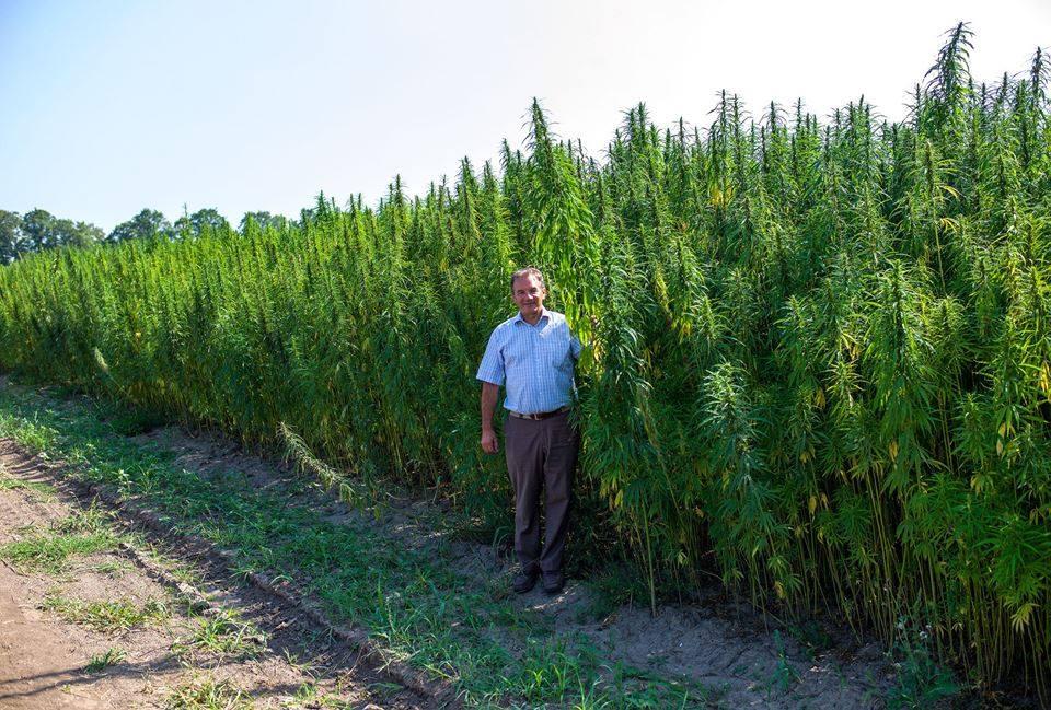 Ахуенный мэр Глухова предлагает выращивать шмаль